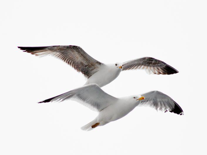 תמונות של ציפורים